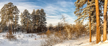 冷淡的晴天在乌拉尔的森林里,俄罗斯 库存图片