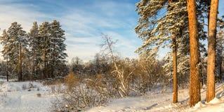 冷淡的晴天在乌拉尔的森林里,俄罗斯 免版税库存照片