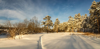 冷淡的晴天在乌拉尔的森林里,俄罗斯 图库摄影