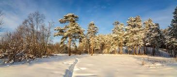 冷淡的晴天在乌拉尔的森林里,俄罗斯 库存照片