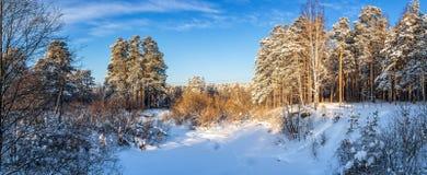 冷淡的晴天在乌拉尔的森林里,俄罗斯 免版税库存图片