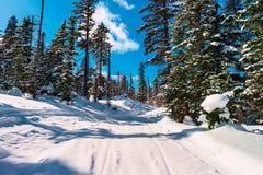 冷淡的晴天在冬天森林里 库存图片