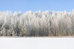 冷淡的晴朗的冬天风景 图库摄影