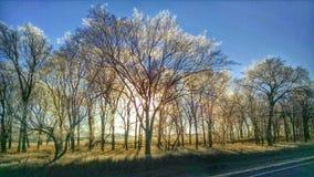 冷淡的结构树 图库摄影