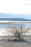 冷淡的结构树 免版税库存照片