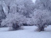 冷淡的mornin 图库摄影
