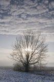 冷漠横向的结构树 库存照片