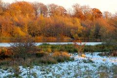 冷漠的森林在11月 免版税库存照片