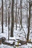 冷漠的风景10 库存图片