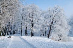 冷的冬天在森林 库存照片