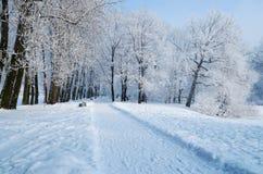 冷的冬天在森林 库存图片