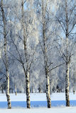 冷的冬天森林风景雪俄罗斯 免版税库存照片