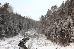 冷的冬天森林风景雪俄罗斯 免版税库存图片