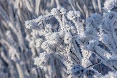 冷的冬天特写镜头 库存图片