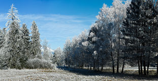 冷的冬日、树冰和霜在树 免版税库存图片
