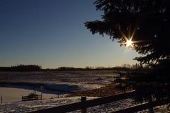 冷的冬日北亚伯大 免版税库存照片