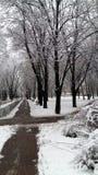 冷的圣诞节12月雪树霜冬天自然白色 图库摄影
