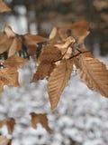 冷的多雪的冬天高涨 库存照片