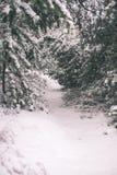 冷的天在多雪的冬天森林里-葡萄酒影片作用 免版税库存照片