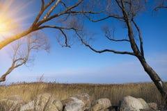 冷的季节的公园 没有叶子的树弯曲了在冰砾和干燥藤茎 免版税库存图片