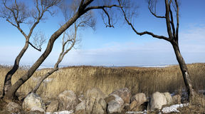 冷的季节的公园 没有叶子的树弯曲了在冰砾和干燥藤茎 免版税图库摄影
