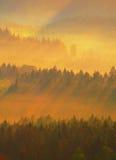 冷的早晨在夏天结束时 与强的金黄光芒和五颜六色的雾的五颜六色的夏天早晨在小山之间 图库摄影