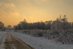 冷的早晨在森林里 库存照片