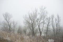冷的早晨在森林里 免版税库存照片