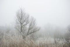 冷的早晨在森林里 库存图片