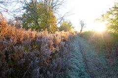 冷的早晨在11月 免版税库存照片
