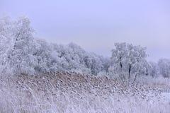冷的有薄雾的冬日 26个综合数字式巨大的mpix全景射击范围多雪的结构树 免版税库存照片
