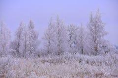 冷的有薄雾的冬日 26个综合数字式巨大的mpix全景射击范围多雪的结构树 图库摄影