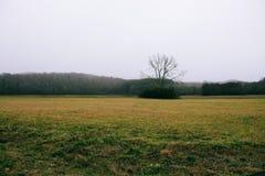 冷的有雾的冬天领域 免版税库存图片