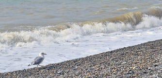 冷的海和海鸥在10月 库存照片