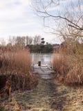 冷的湖秋天冬天风景浮船场面木树桩ree 免版税图库摄影