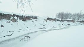 冷的镇静冬日在多雪的森林里 股票视频