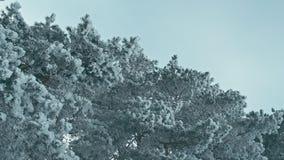 冷的镇静冬日在多雪的森林里 股票录像
