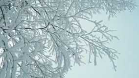 冷的镇静冬日在多雪的森林里 影视素材