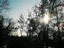 冷的阳光 库存照片