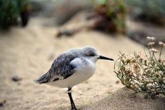 冷的鸟 免版税库存图片