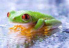 冷青蛙 图库摄影