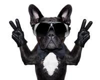 冷静狗 免版税库存照片