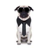 冷静狗 免版税图库摄影