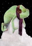 冷颤的变色蜥蜴 免版税库存图片