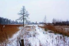 冷,多雪的天风景在1月 免版税库存照片