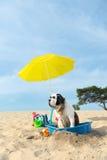 冷却为在海滩的狗 库存照片
