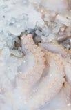 冷冻未加工的章鱼 免版税库存图片