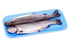 冷却的鳟鱼 免版税库存照片