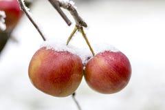 冷冻苹果 免版税库存照片