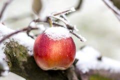 冷冻苹果 免版税图库摄影